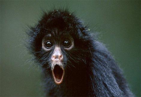 雷人,可爱的,动物的表情